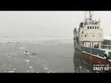 Моряк рискуя своей жизнью спас замершую собаку