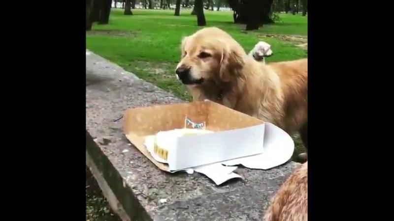 Não encosta no meu bolo