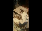 TACO режет тортик