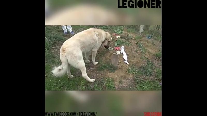 Чем больше познаю людей, тем больше нравятся собаки...