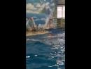 Купаюсь с дильфиноми ПОДАРОК ОТ МАМЫ