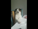 Хозяйка ругает пса