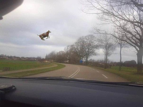 А говорят что коровы не летают