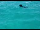Дружба дельфина и собаки