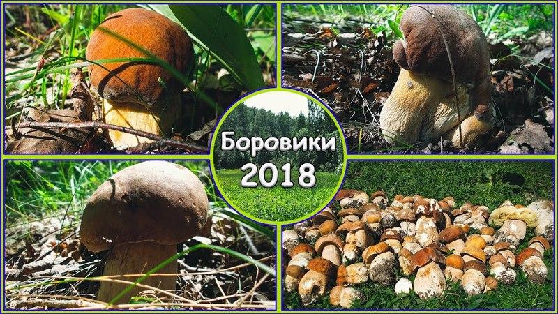 Сбор Грибов Белые грибы Боровики Май 2018 Жизнь в деревне