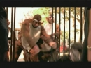 BloodhoundGangVEVO_2012-11-06_Bloodhound Gang - The Bad Touch (Explicit)