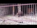 Медведь в экопарке Зюраткуль