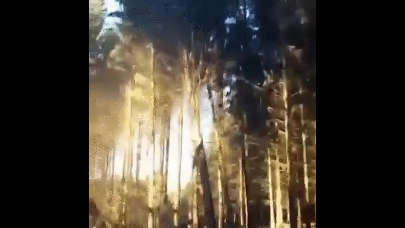 Лесоруб 666 уровня