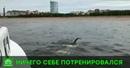 Марафонец Евгений Никитин поставил рекорд при заплыве из Петербурга в Кронштадт
