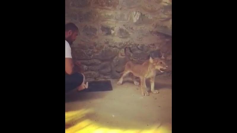 Черкесский бизнесмен Турции кормит своего львенка
