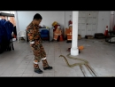 Wira Penyelamat Kiss King Cobra at Temerloh Fire Station (Part 2)