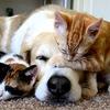 Собаки и кошки на пристройство
