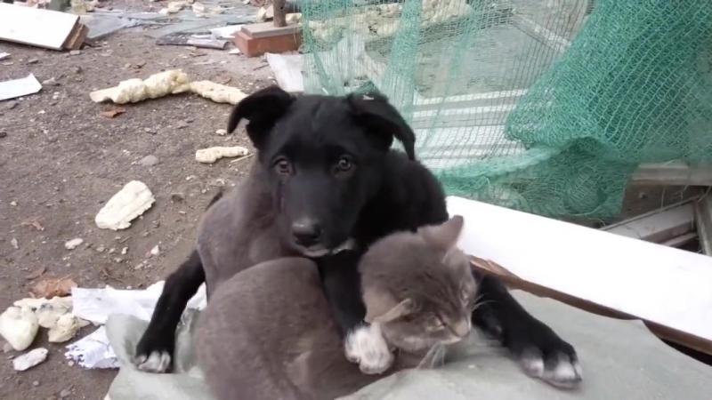 Милая бездомная семейка