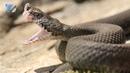 Осторожно змеи!