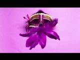 DEV x Fabolous - Kiss My Lips (2012)