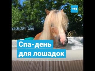 Спа-день для лошадок