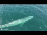 ·•●❥ Звуки китов ·•●❥ Глубокий релакс