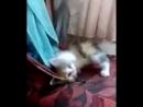 моя любимая кошечка