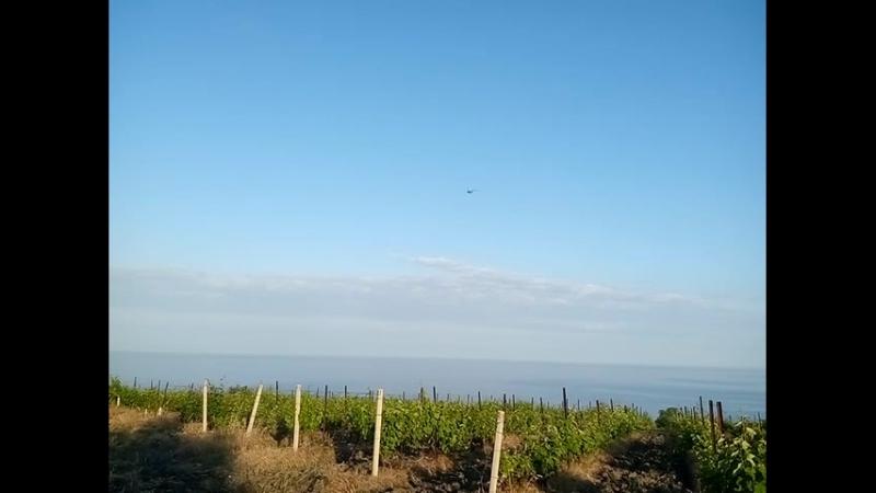Виноградники. Ливадия. Ялта