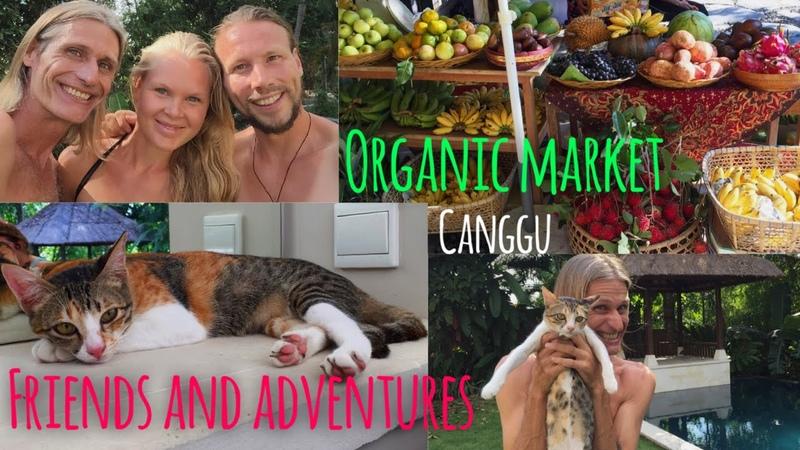 ORGANIC MARKET CANGGU, MEETING FRIENDS AND EPIC ADVENTURES VLOG