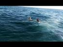 Ныряем в открытое море...