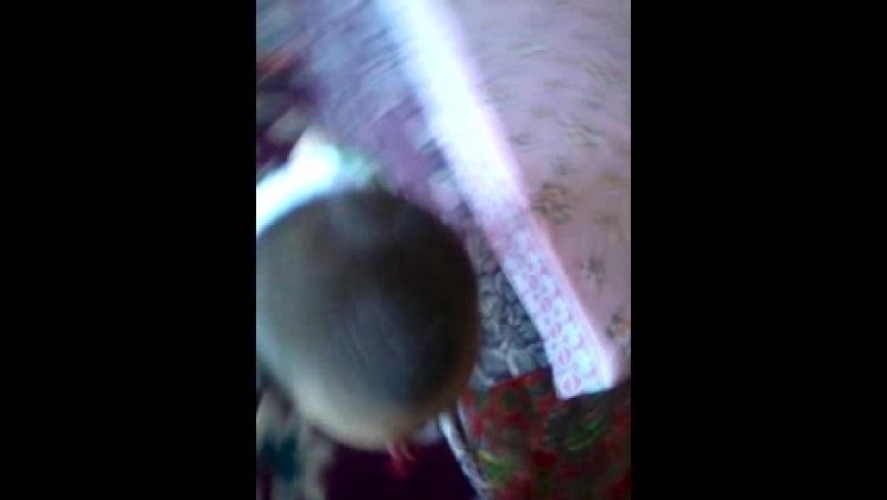 Video-2013-07-11-12-15-53