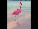 Flamingo Flashdance