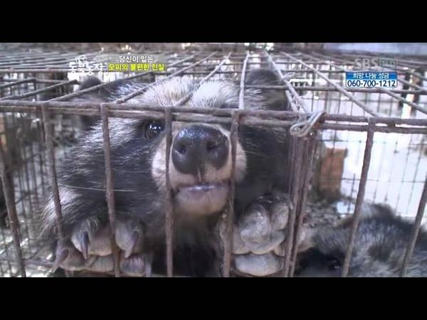 산채로 가죽 벗기는 중국 모피시장