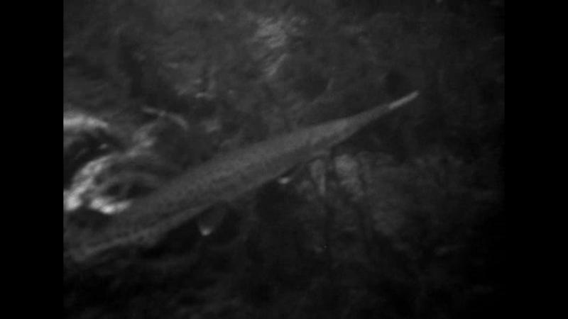 Чудовище из Черной Лагуны.(Существо из Черной лагуны)1954.Ужасы