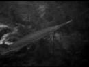 Чудовище из Черной Лагуны.Существо из Черной лагуны1954.Ужасы
