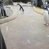 If Keith Flint was a penguin