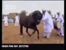 V танцует лезгинку в египте mp4