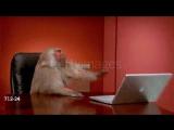 Мнение бабуина по поводу техники Apple