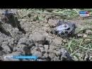 Пилот вертолета Ми-2 скончался в больнице Моздока. Возбуждено уголовное дело