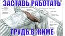 Юрий Спасокукоцкий Жим Лежа Заставь Работать Грудные Мышцы Ставь Локти и Ноги Правильно