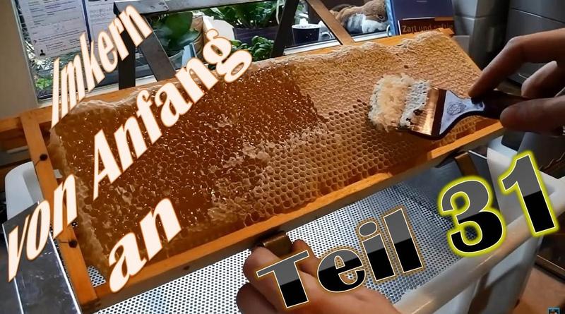 Imkern von Anfang an Honig entdeckeln, schleudern und sieben
