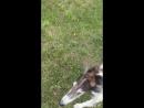 Жил был пёс 🐶 умный, добрый и красивый