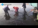 80 тысяч мальков выпустили в озеро Торма в Бурятии