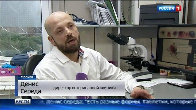 Вести-Москва • Клещи проснулись раньше срока - есть первые пострадавшие