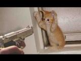 Смешные кошки приколы про кошек и котов 2017 #24 (Кошачья борьба Боевые кошки)