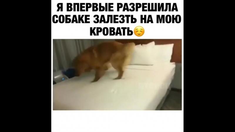 Первое впечатление от кровати (смешное видео, хорошее настроение, юмор, собака, собачка, пёс, животное, кровать, спальня).