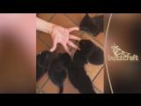 Милые котики и МИЛЫЕ ЖИВОТНЫЕ поднимут Вам настроение на 120%