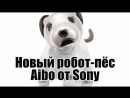 Новый робот-пёс Aibo от Sony