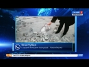 Жители микрорайона «Весенний» вновь пожаловались на черный снег