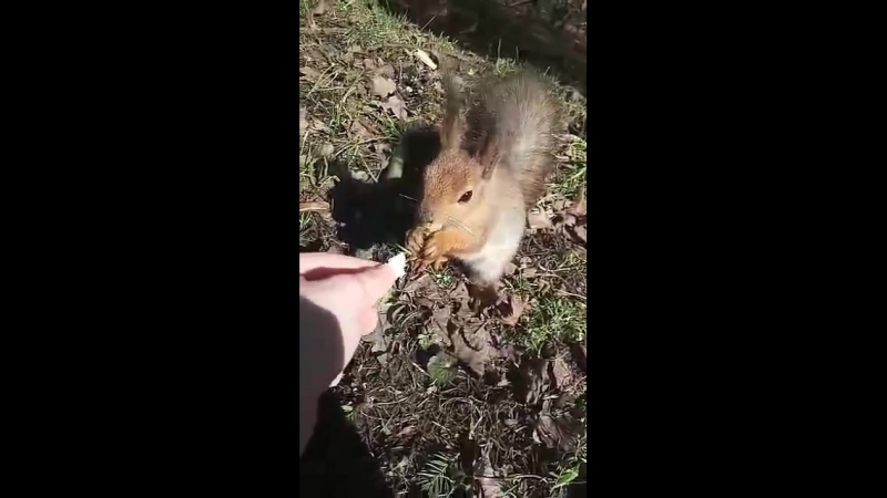 Алёна кормит белочку в парке Питера