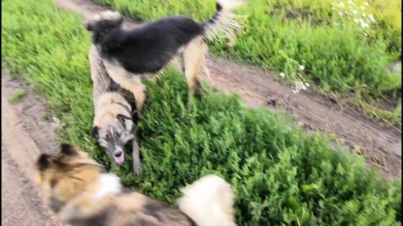 Мила, Сима и Геша на прогулке