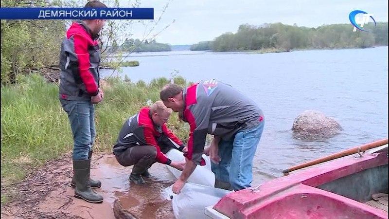В демянское озеро Вельё выпустили 150 тысяч мальков щуки