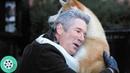 Преданный пёс каждый день встречает и провожает своего хозяина. Хатико: Самый верный друг (2009)