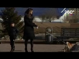 Депутаты предложили заматывать морды собак скотчем