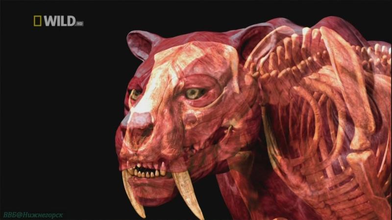 «Доисторические хищники: Саблезубый тигр» (Познавательный, природа, животные, 2007)
